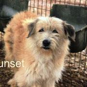 1 Tier in Rumänien durch Namenspatenschaft Sunset, Pro Dog Romania eV