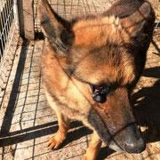 1 Tier in Rumänien durch Namenspatenschaft Maurizio, Pro Dog Romania eV