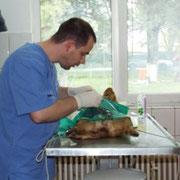 8 Hunde im Tierheim BUCOV, Ploiesti, Rumänien, Pro Dog Romania eV