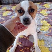 1 Tier in Rumänien durch Namenspatenschaft Josefine, Pro Dog Romania eV