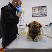 8 Tiere in Rumänien, Equiwent - Schmiede ohne Grenzen eV