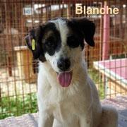 1 Tier in Rumänien durch Namenspatenschaft Blanche  Pro Dog Romania eV