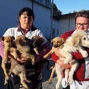 2 Tiere in Rumänien über Tierhilfe Hoffnung eV