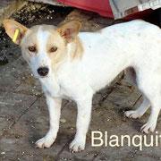 1 Tier in Rumänien durch Namenspatenschaft Blanquita, Pro Dog Romania eV