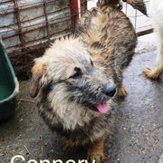 1 Tier in Rumänien durch Namenspatenschaft Connery Pro Dog Romania eV