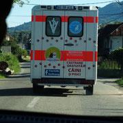 10 Kastrationen in Rumänien, Tierhilfe Hoffnung eV