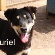 1 Tier in Rumänien durch Namenspatenschaft Muriel Pro Dog Romania eV