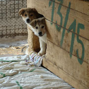 1 Tier in Rumänien durch Tierhilfe Hoffnung eV