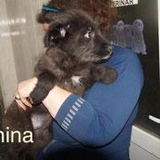 1 Tier in Rumänien durch Namenspatenschaft Anina, Pro Dog Romania eV