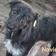 1 Tier in Rumänien durch Namenspatenschaft Navidad, Pro Dog Romania eV
