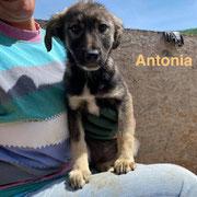 1 Tier in Rumänien durch Namenspatenschaft Antonia Pro Dog Romania eV