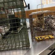 2 Katzen in Spanien über Asciciación La Esperanza Para Animales
