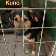 1 Tier in Rumänien durch Namenspatenschaft Kuno, Pro Dog Romania eV