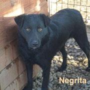 1 Tier in Rumänien durch Namenspatenschaft Negrita, Pro Dog Romania eV