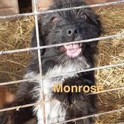 1 Tier in Rumänien durch Namenspatenschaft Monrose, Pro Dog Romania eV