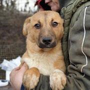 1 Tier in Rumänien durch Namenspatenschaft Leona Pro Dog Romania eV