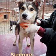 1 Tier in Rumänien durch Namenspatenschaft Siempre Pro Dog Romania eV