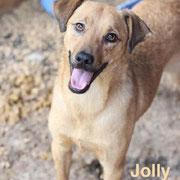 1 Tier in Rumänien durch Namenspatenschaft Jolly, Pro Dog Romania eV