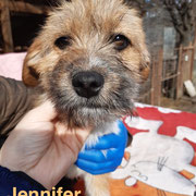1 Tier in Rumänien durch Namenspatenschaft Jennifer, Pro Dog Romania eV