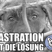 6 Hunde, Pro Dog Romania eV für Tierheim Ploiesti, Rumänien