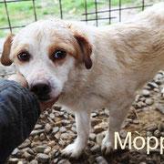 1 Tier in Rumänien durch Namenspatenschaft Moppel Pro Dog Romania eV