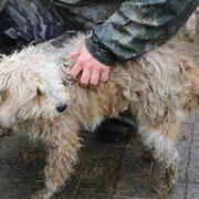 1 Tier in Rumänien durch Namenspatenschaft Fussel, Pro Dog Romania eV