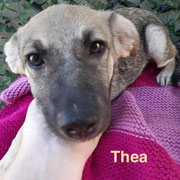 1 Tier in Rumänien durch Namenspatenschaft Thea, Pro Dog Romania eV