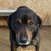 1 Tier in Rumänien durch Namenspatenschaft Juppi, Pro Dog Romania eV