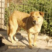 1 Tier in Rumänien durch Namenspatenschaft Klaus-Peter, Pro Dog Romania eV