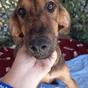 1 Tier in Rumänien durch Namenspatenschaft Jim-Bob, Pro Dog Romania eV