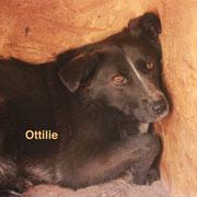 1 Tier in Rumänien durch Namenspatenschaft Ottilie, Pro Dog Romania eV