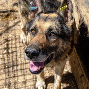 1 Tier in Rumänien durch Namenspatenschaft Mitch Pro Dog Romania eV