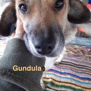 1 Tier in Rumänien durch Namenspatenschaft Gundula, Pro Dog Romania eV