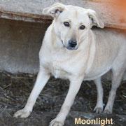 1 Tier in Rumänien durch Namenspatenschaft Moonlight Pro Dog Romania eV