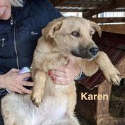 1 Tier in Rumänien durch Namenspatenschaft Karen, Pro Dog Romania eV