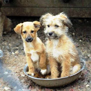 6 Hunde im Tierheim Ploiesti, Rumänien über Pro Dog Romania eV