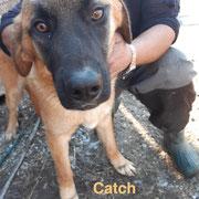1 Tier in Rumänien durch Namenspatenschaft Catch, Pro Dog Romania eV