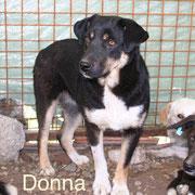 1 Tier in Rumänien durch Namenspatenschaft Donna Pro Dog Romania eV