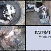 4 Hunde in Rumänien durch Pro Dog Romania eV