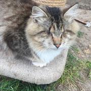 1 Tier in den Schlupfwinkeln Moldawien über Stimme der Tiere eV