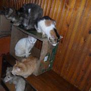 5 Katzen und 5 Kater in den Schlupfwinkeln Moldawien