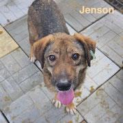 1 Tier in Rumänien durch Namenspatenschaft Jenson, Pro Dog Romania eV