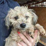 1 Tier in Rumänien durch Namenspatenschaft Star, Pro Dog Romania eV