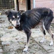 1 Tier in Rumänien durch Namenspatenschaft Traviata Pro Dog Romania eV