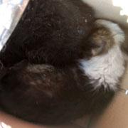 2 Tiere in den Schlupfwinkel Moldawien über Stimme der Tiere eV
