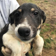 1 Tier in Rumänien durch Namenspatenschaft Shangri-La Pro Dog Romania eV