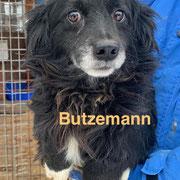 1 Tier in Rumänien durch Namenspatenschaft Butzemann, Pro Dog Romania eV