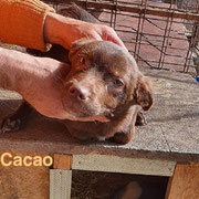 1 Tier in Rumänien durch Namenspatenschaft Cacao, Pro Dog Romania eV