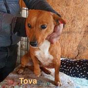 1 Tier in Rumänien durch Namenspatenschaft Tova, Pro Dog Romania eV