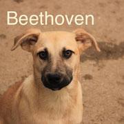 1 Tier in Rumänien durch Namenspatenschaft Beethoven, Pro Dog Romania eV